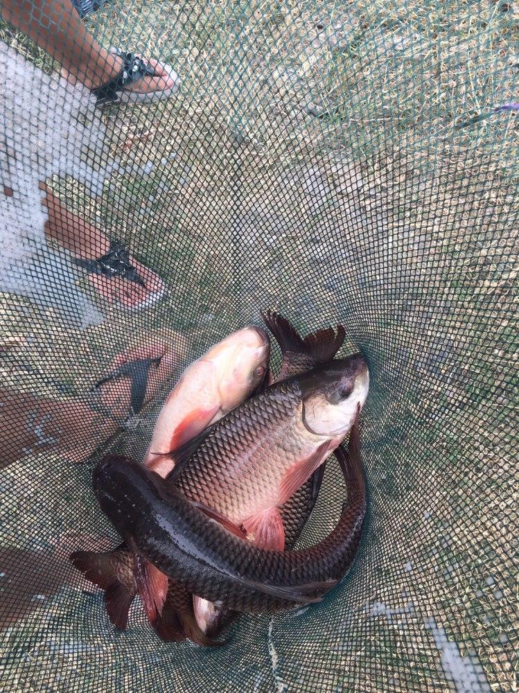 บ่อปลานิลเปิดใหม่  จ่าเหวกปลาเกล็ด