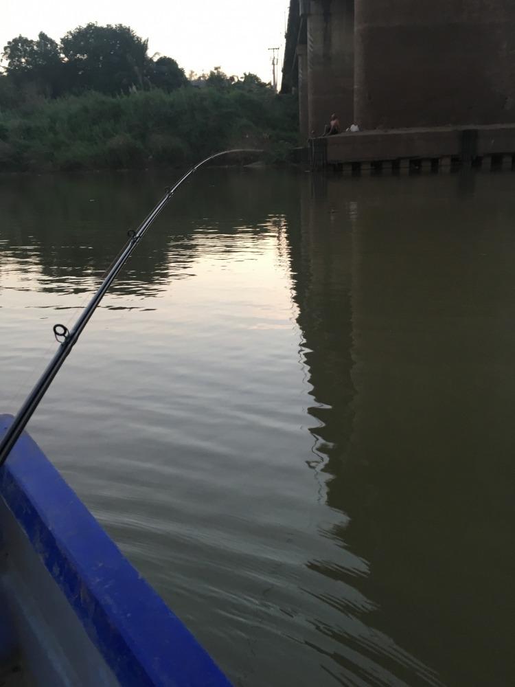 ปลาเบี้ยวเจ้าพระยา...!!!
