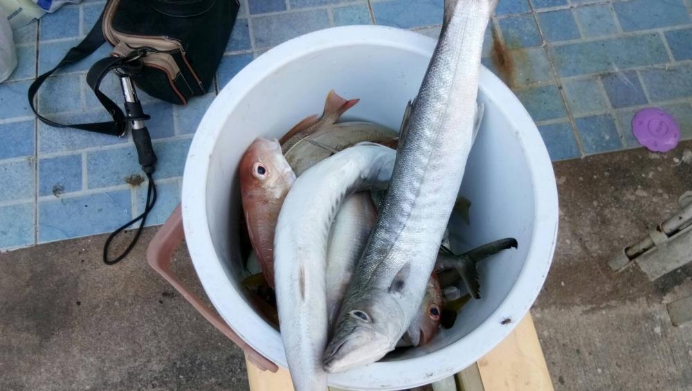 หาปลาแกงกัน