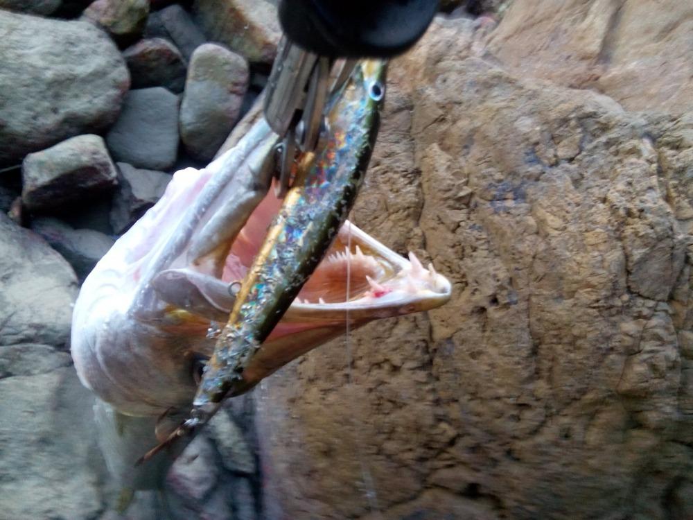 @**ตอนเย็นๆกับปลาสากชายฝั่ง**@