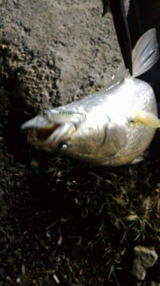 ปลา ชิวๆ กับ กลม บางกรวย