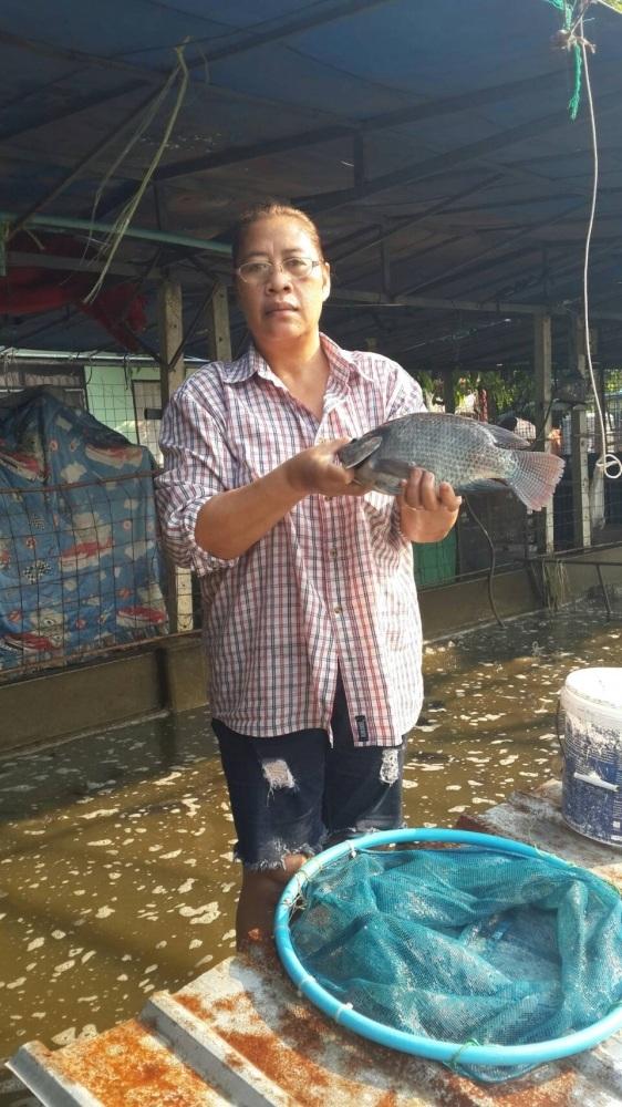 พุธนี้ บ่อป้าเล็กCPK ลงปลาใหม่แล้วจร้า 300 กว่าโล ไซร์ 1.5 โล