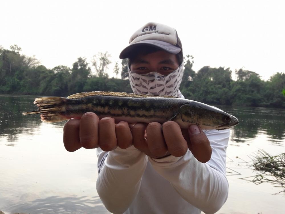 กระสูบ น้ำไหล กาญจนบุรี