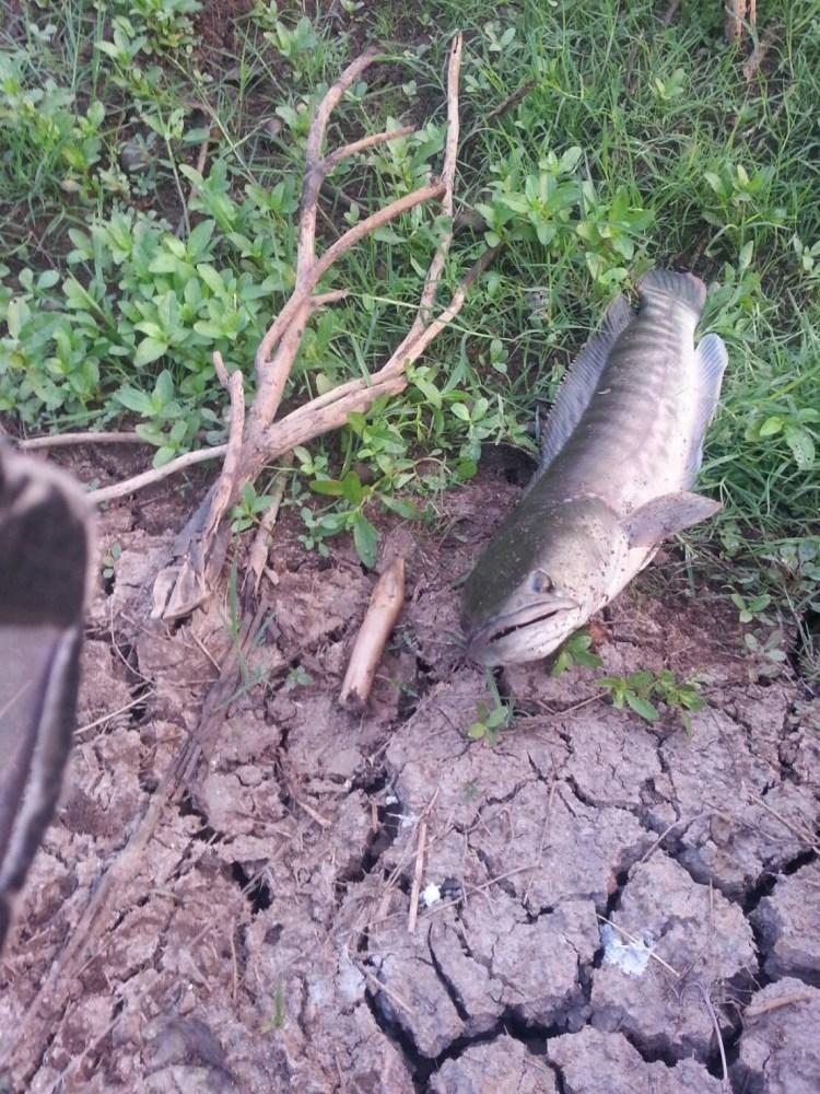 เมื่อวานเขียดวันนี้ปลาไหล