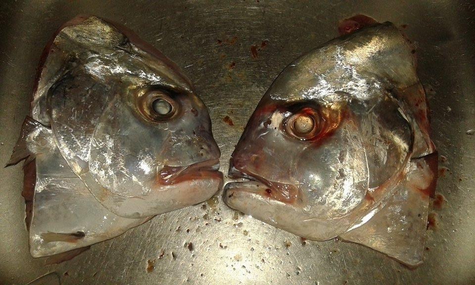 แกงส้มสายบัวกับ หัวและเครื่องในปลาโฉมงาม