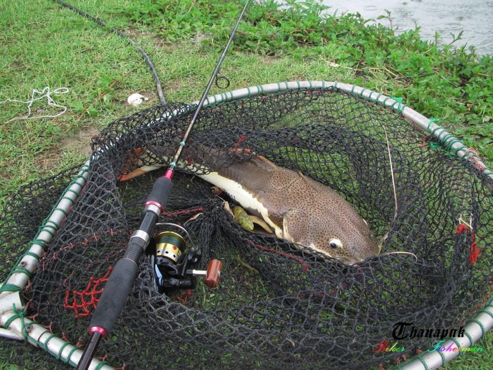 .......ฤกษ์งามยามดี ตีปลาในวันฝนพรำ.......