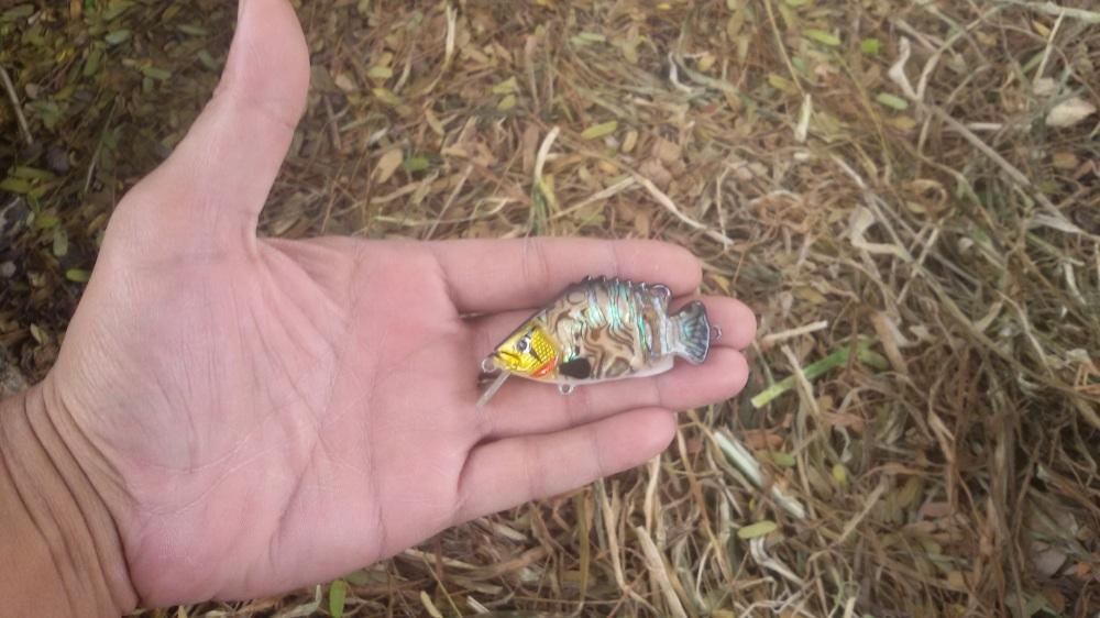 ปลาซิว