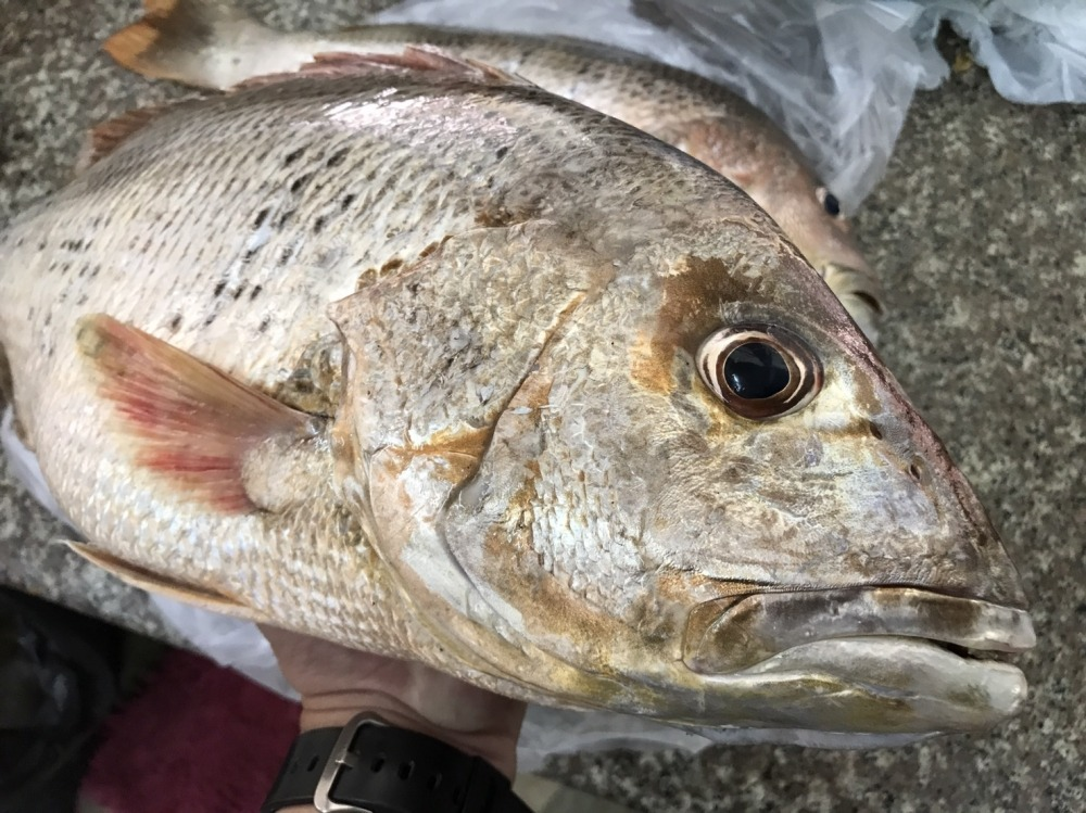 ปลาอังเกยผัดเต้าซี่