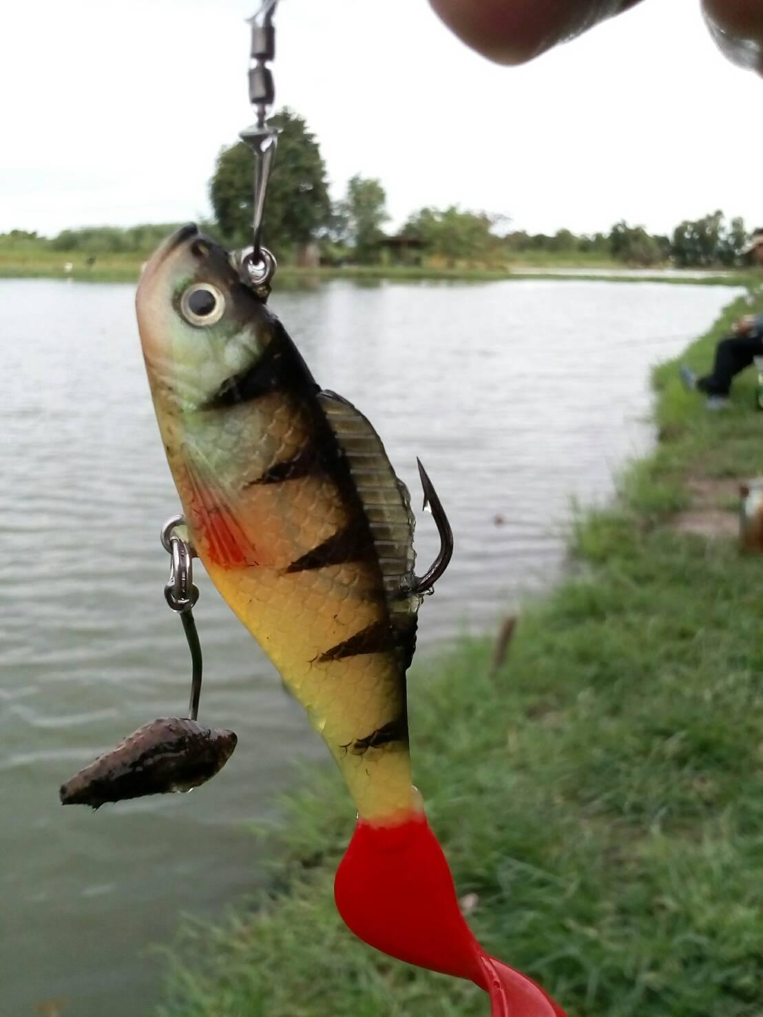 ปลากินไม่ทันหอย