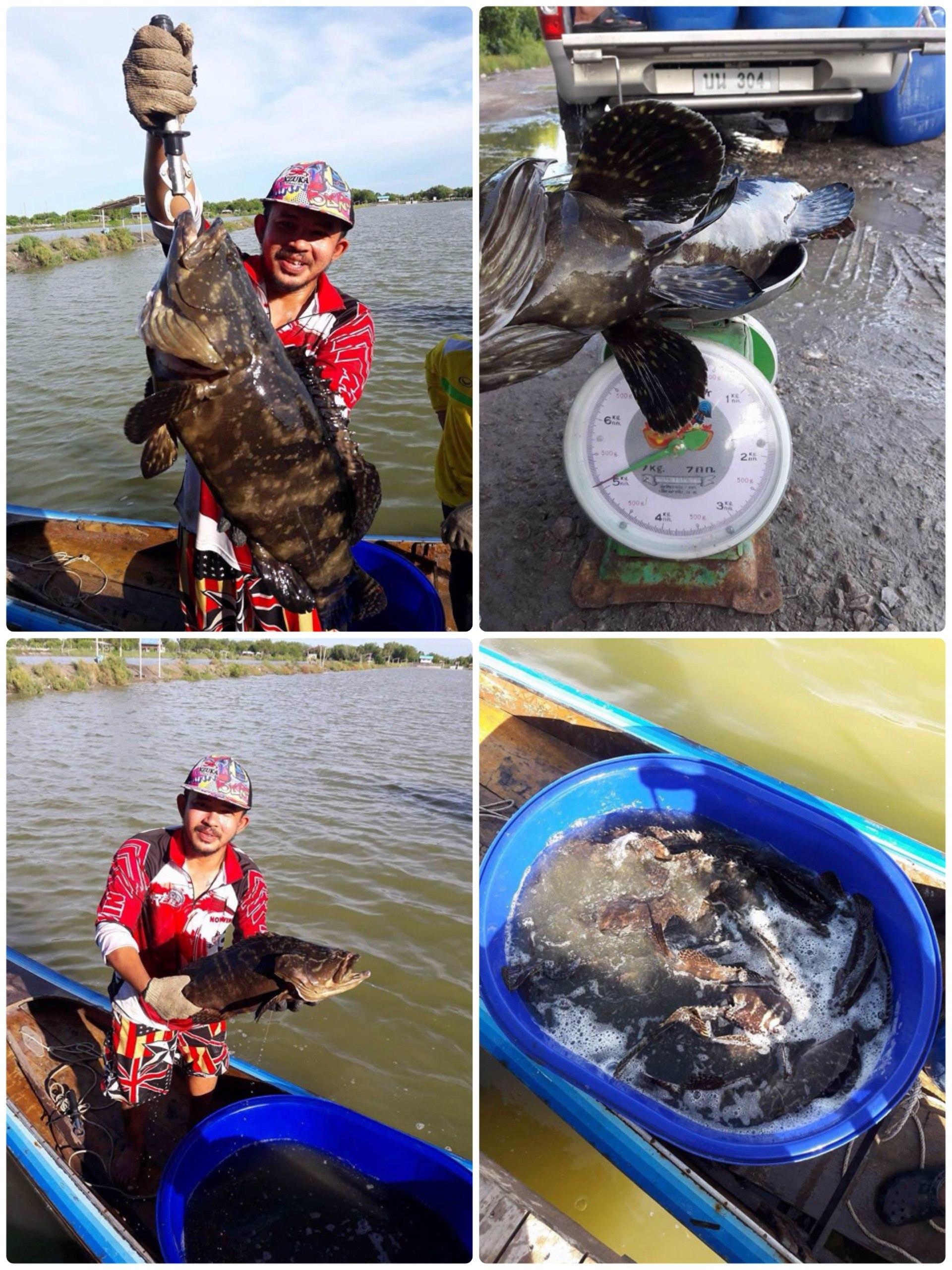 แล่ว แล่ว แล่ว ลงปลาใหม่ทุกอาทิตย์    บุฟเฟ่ บ่อน้องวิน
