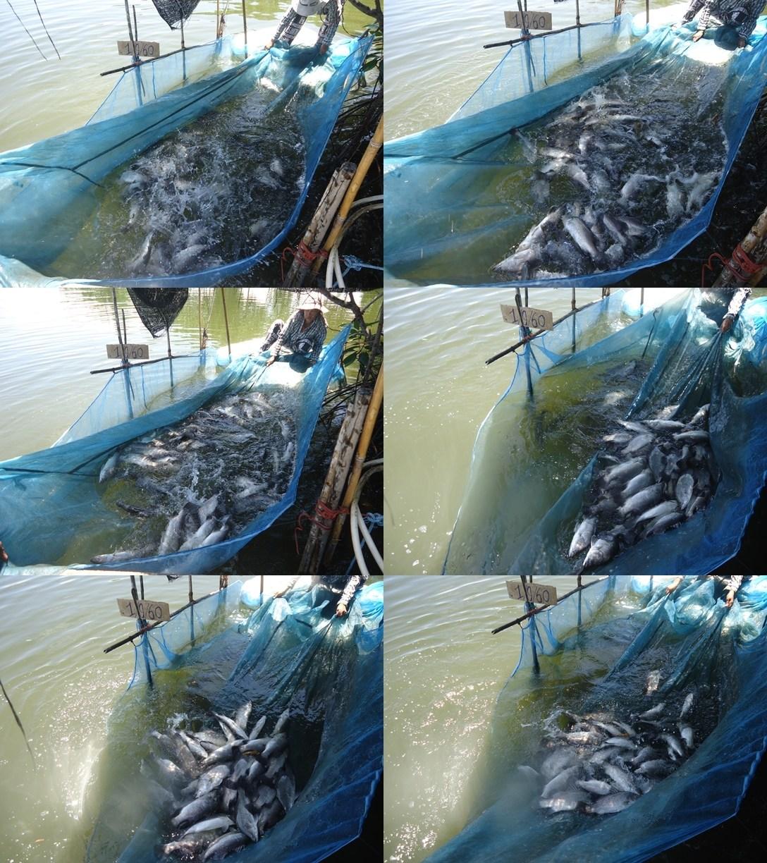 ลงปลาแล้วจร้า