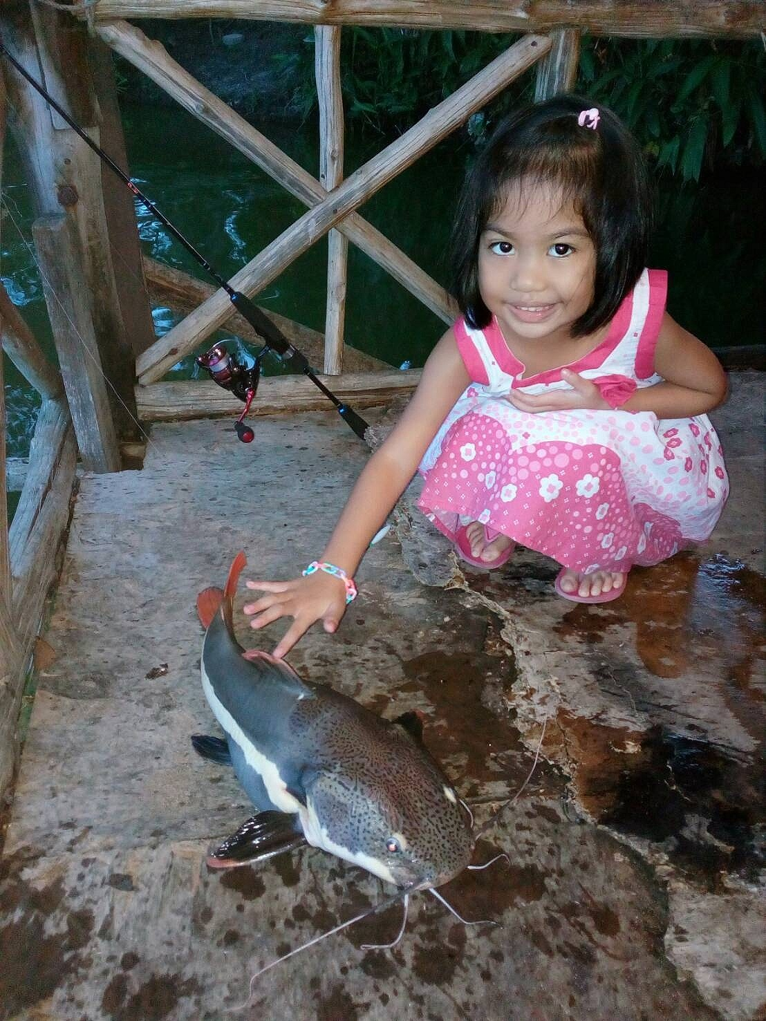 Abu vs Redtail Catfish