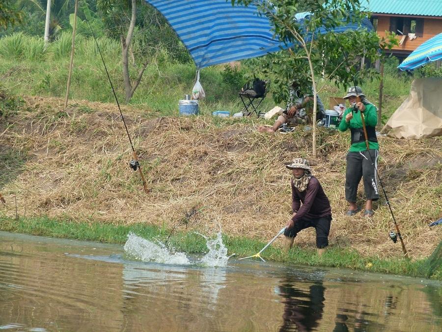 บ่อตกหน้าดิน ลงปลาเพิ่ม 1500 กิโล บ่อกฤษดาคลองหัวกรด ปราจีนบุรี