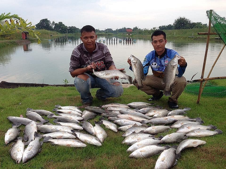 บ่อตกปลากระพงสายเเข็ง นครปฐม ลงปลาเพิ่มพักกันยาวๆๆ
