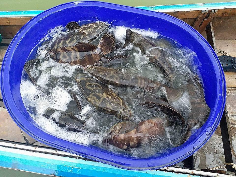 ขอเชิญน้าๆร่วมแข่งขันตกปลาบุฟเฟ่ ปลาหมอ ปลาเก๋า บ่อน้องวิน ฉลองครบรอบ 3เดือน วัน