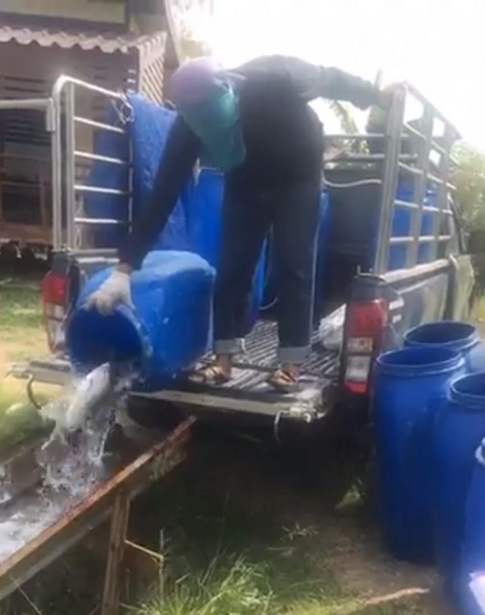 ลงปลาใหม่ 300 โล บ่อตกปลากระพงและสนามกีฬาชนไก่ลาดหลุมแก้ว