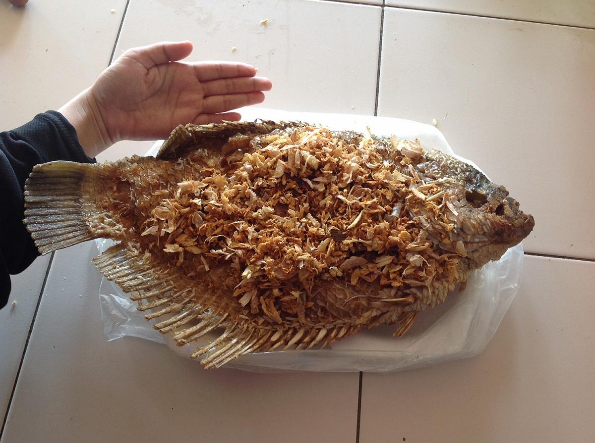 บ่อตกปลาสามารถฟิชชิ่ง