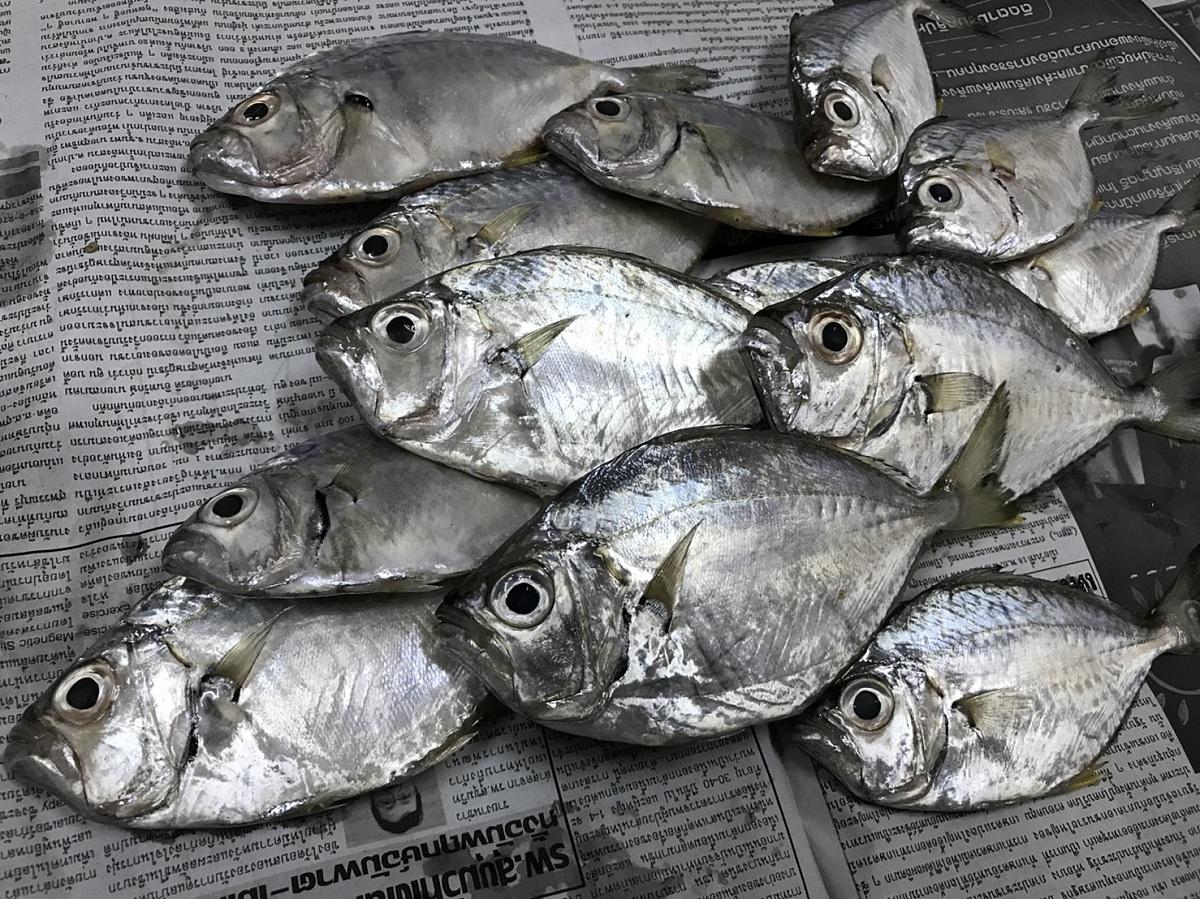 ปลาแป้นทอด