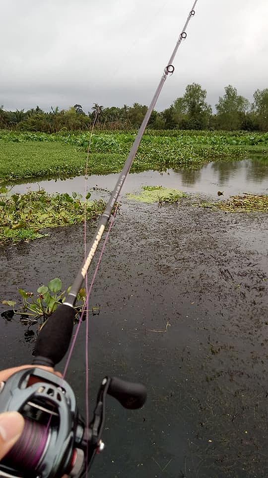 ถ้าเราจะตกปลาชะโดจริงๆแล้วเราต้องตีตามริมตลิ่งเหมือนตกปลาช่อนไหมครับ