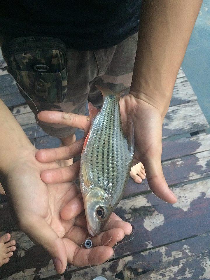 รบกวนสอบถามชื่อปลา3 ชนิดครับ