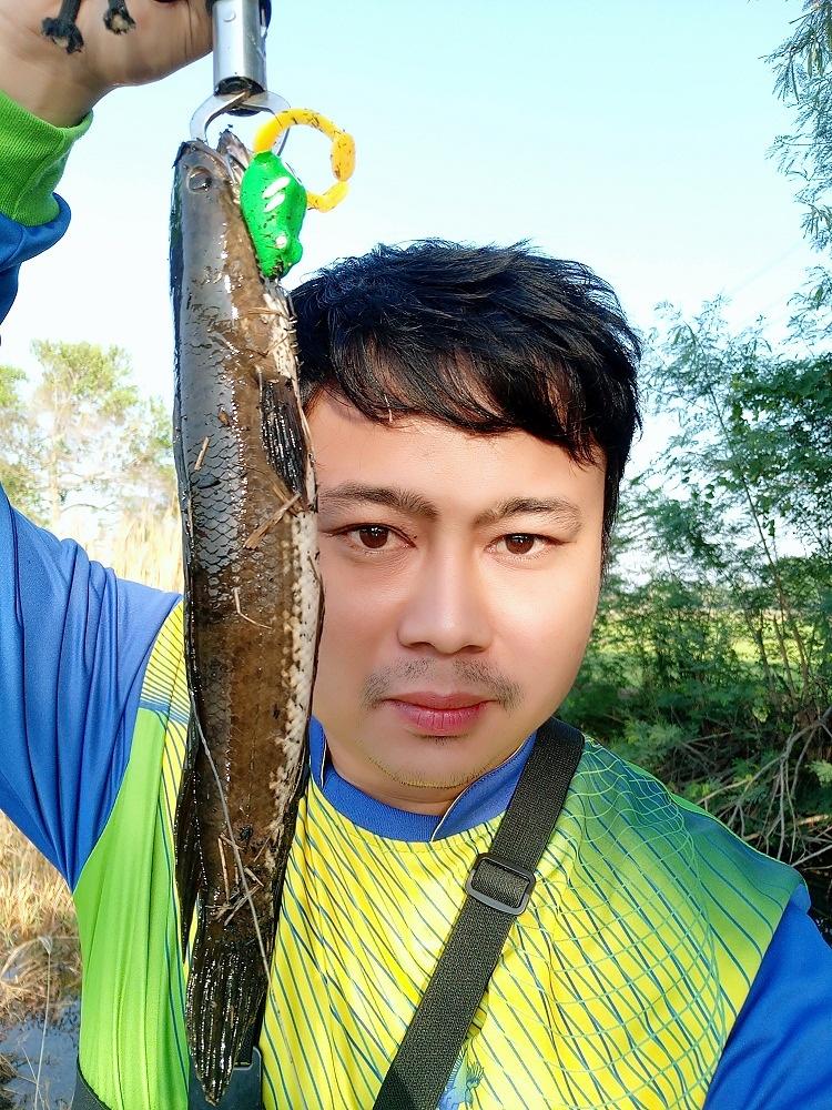 ปลาช่อนนาพาเพลิน