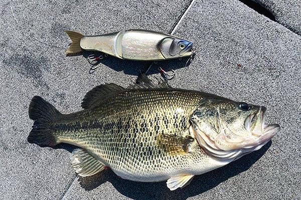 คนญี่ปุ่นกับ big bait