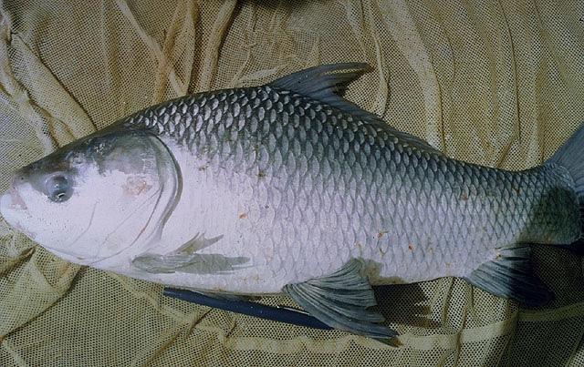 ปลาดูดเม็ดโฟมแบบไหน