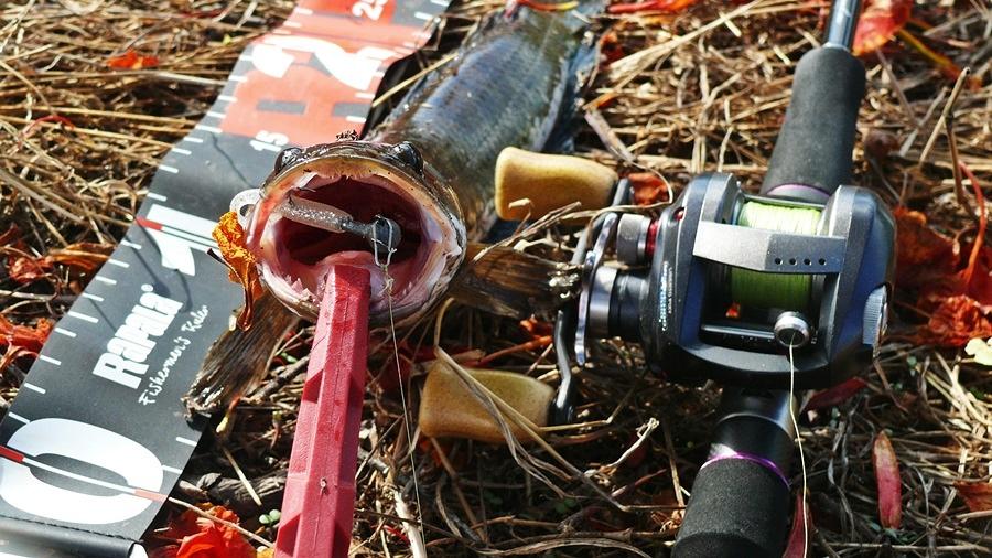 หนอนยางไม้ตายปลาช่อนจริงๆ