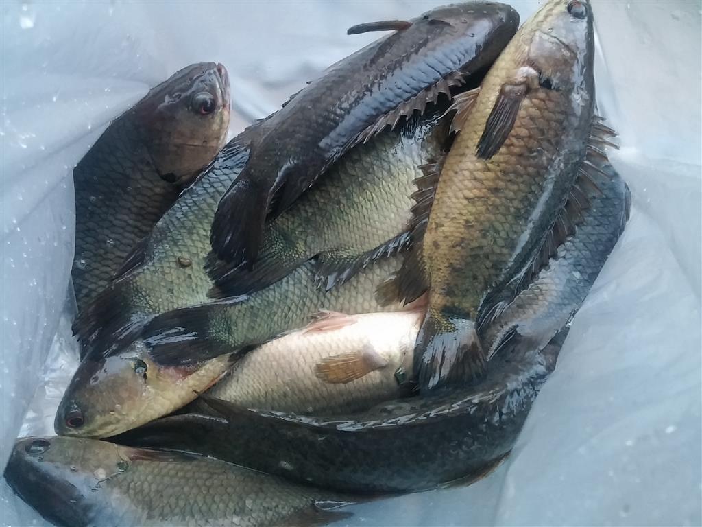 ก็บอกแล้วของมันต้องมี ทำไว้เถอะครับ ที่ปลดเบ็ดปลากลืน ช่วยคุณได้