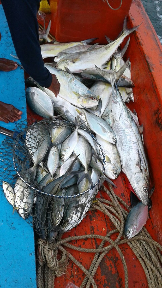 ตกปลาสีชัง...กับไต๋เต็ง