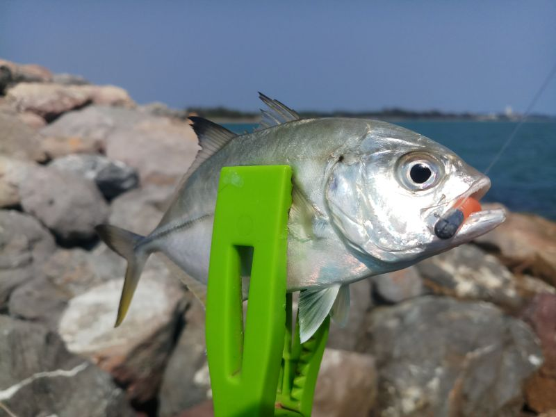 ชีวิตติดหวาน(Ajing fishing)
