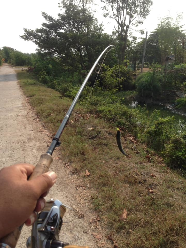 ปลายางกับช่อนคลอง
