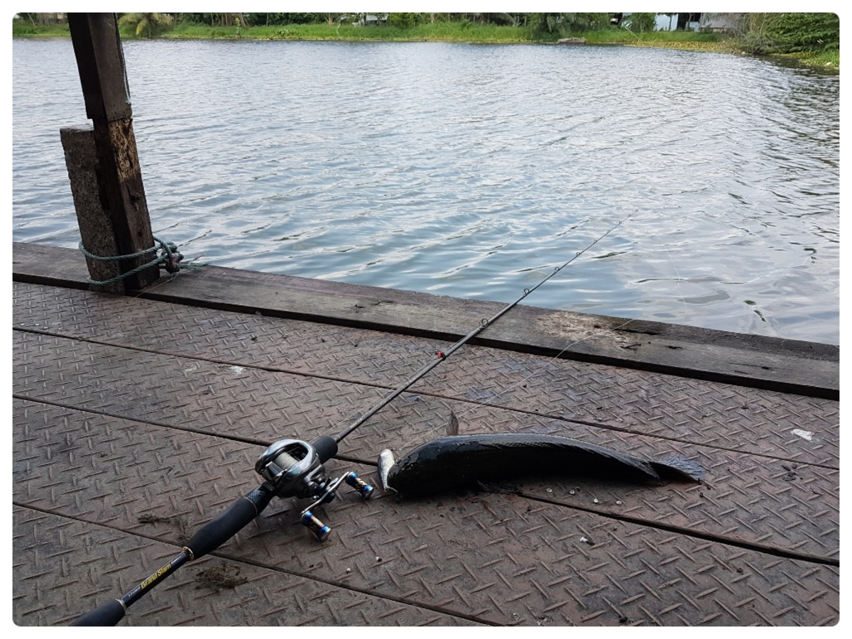 ตกปลาช่อนสนุก ๆ ครับ