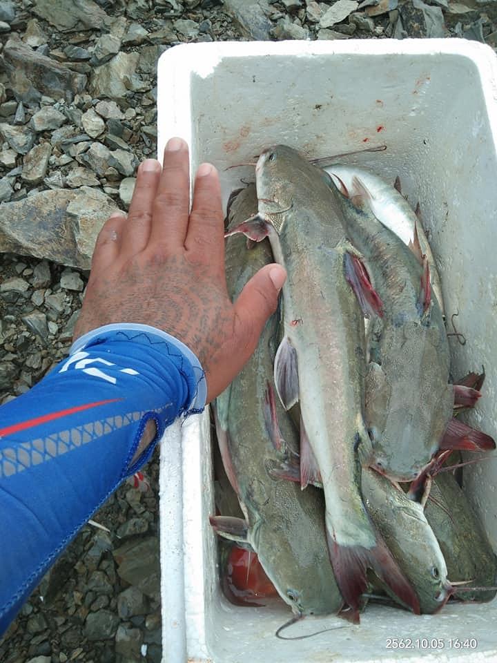 ดอนหอยหลอดปลากดเข้า