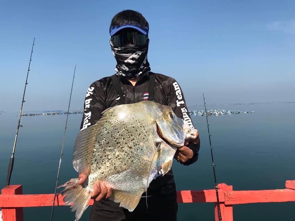 ตกปลาใบปอ ตัวใหญ่ๆ สนุกมากครับ