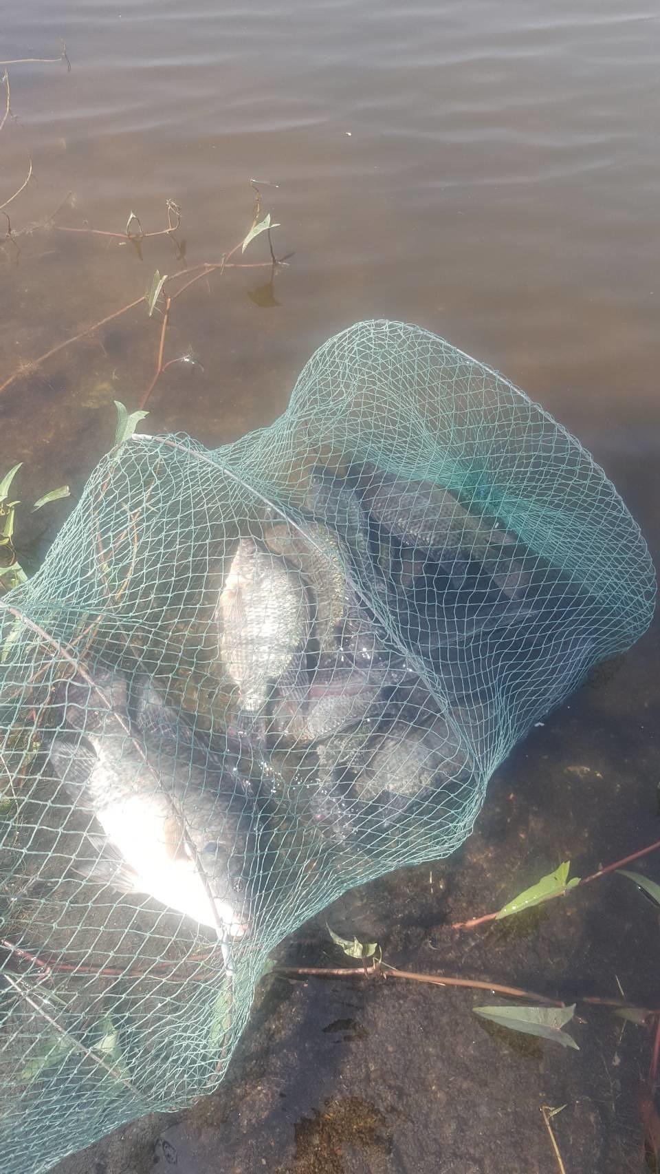 บ่อตกปลาทรายทอง บางปะอิน