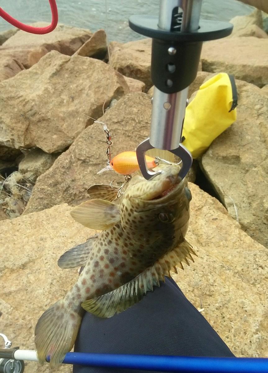 FatShad 5 อาหารปลาเก๋า