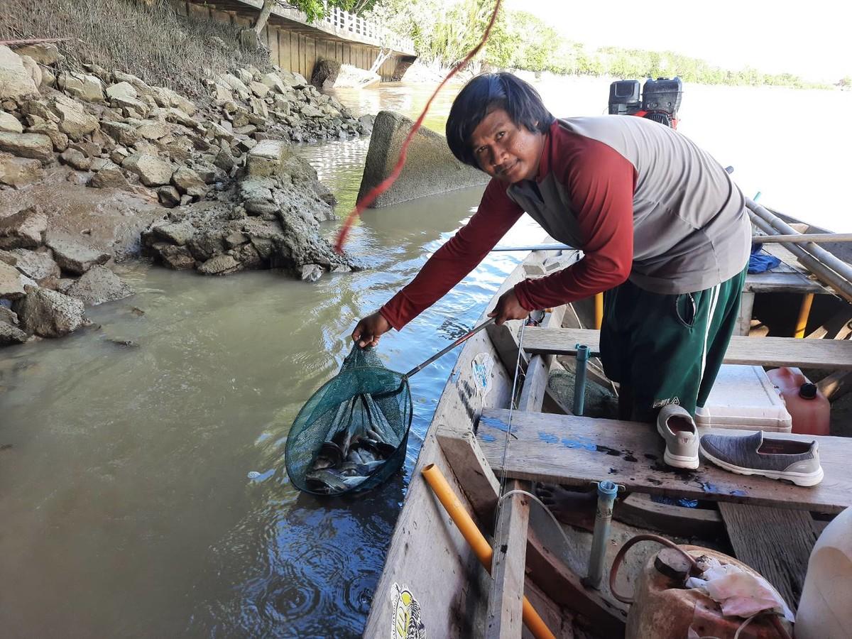 ปล่อยปลากระพงขาว...คืนสู่ธรรมชาติ (แม่น้ำบางปะกง)