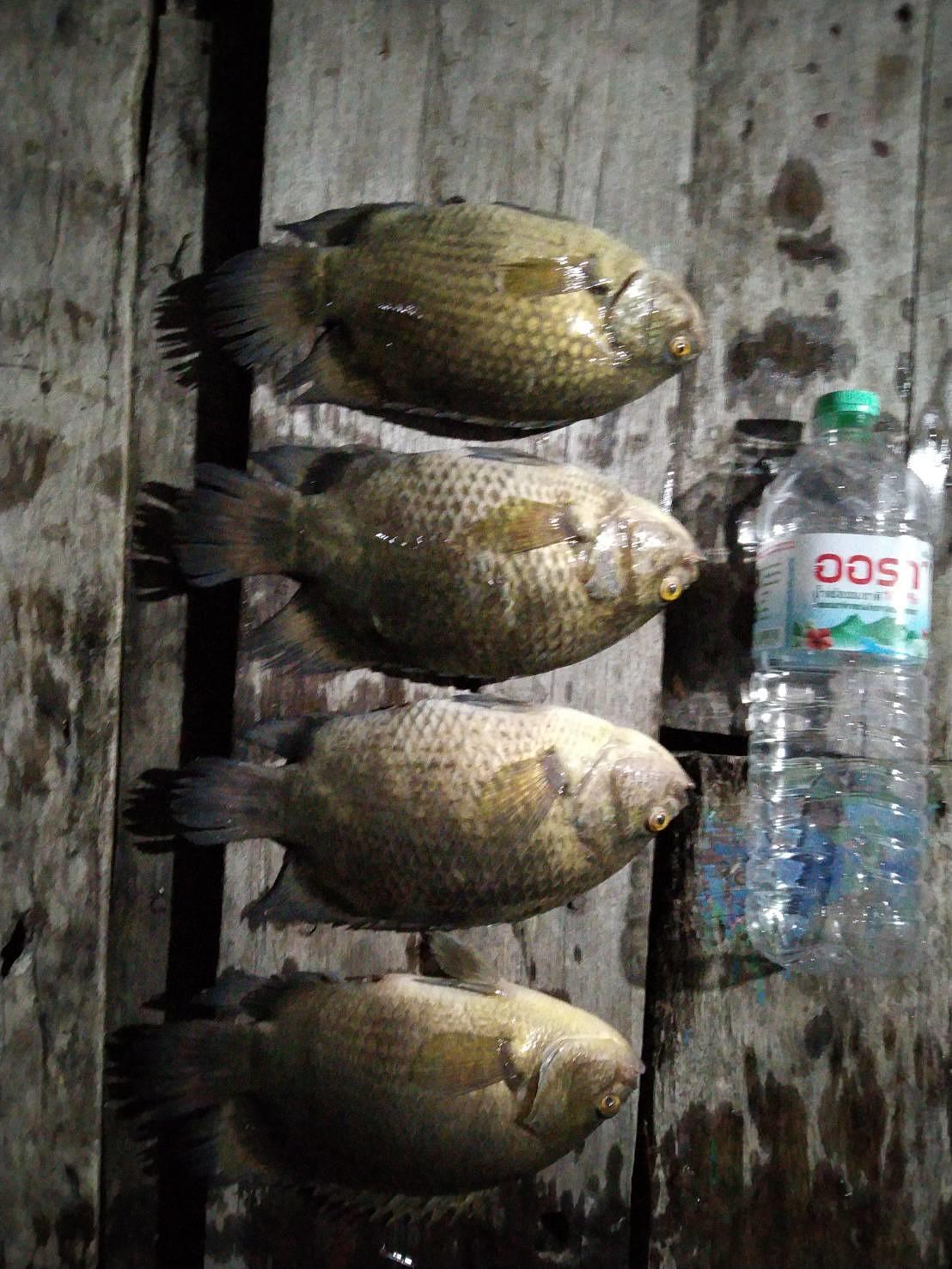 ไปตกปลาหมอปี